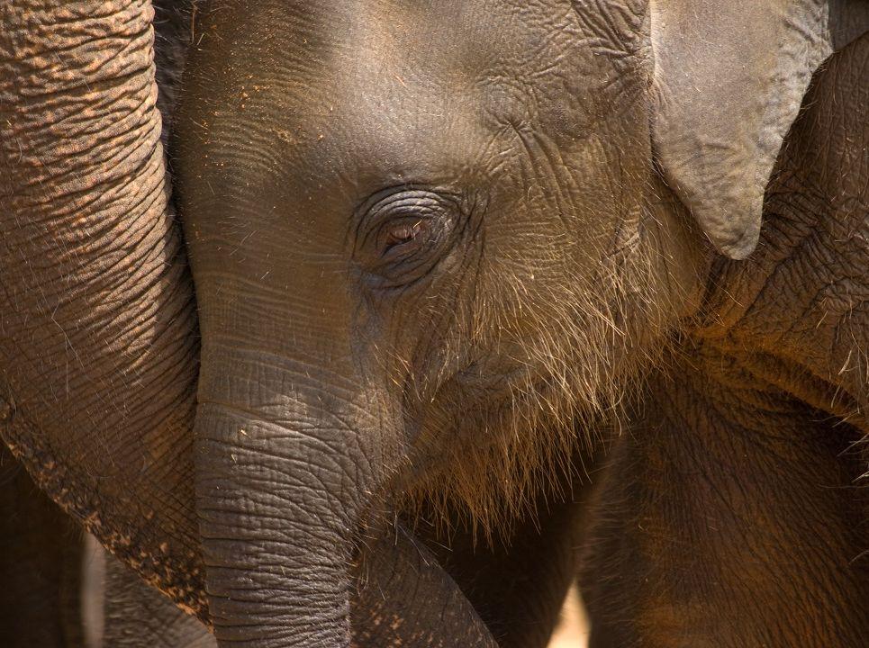 Fotka slůněte ve sloním útulku, který patří mezi oblíbené cíle pro výlety na jihu Srí Lanky