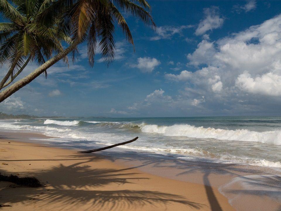 Fotka pláže a palem před Tropical Garden